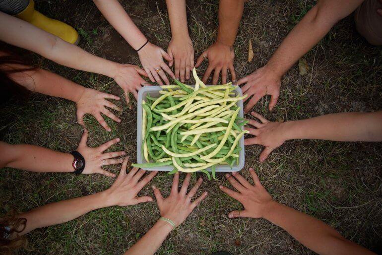 Vi er allerede begyndt at høste fra egen have